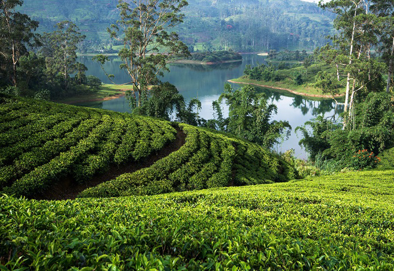 Ceylon tea at Gulfood 2020