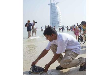 Jumeirah releases 45 turtles into Arabian Gulf