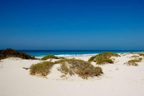 Saadiyat hotel beaches reopen after oil spill