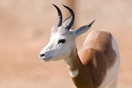 PHOTOS: Al Ain Wildlife Park celebrates Zoo Babies