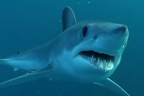 Shark attack kills honeymooner in Seychelles