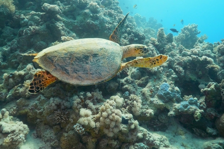 Red Sea Development Company teams up with university on sustainability challenge