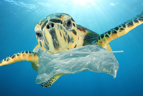 Brand View: Time is up for plastic bags