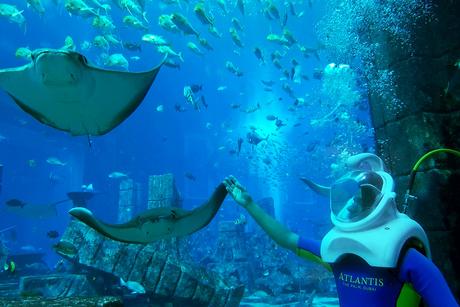 Aqua trek experiences at Atlantis, The Palm