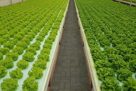 Armela Farms to open three-hectare facility next year