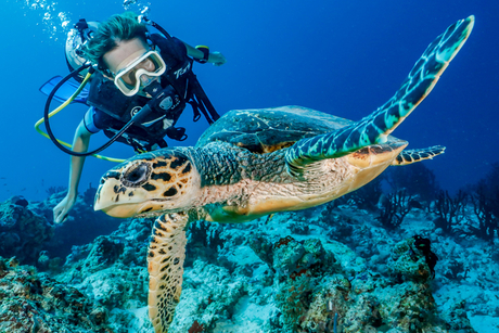 One&Only Reethi Rah opens turtle rehabilitation centre