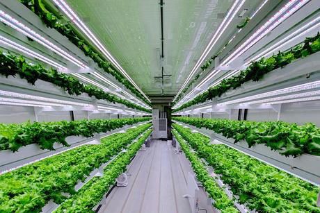 Hydroponic vertical farm to launch in Abu Dhabi