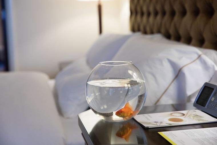 The Westin Mina Seyahi offers goldfish in-room amenity in Dubai