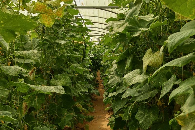 One to One Hotels dedicates 3,000sqm to bio-garden