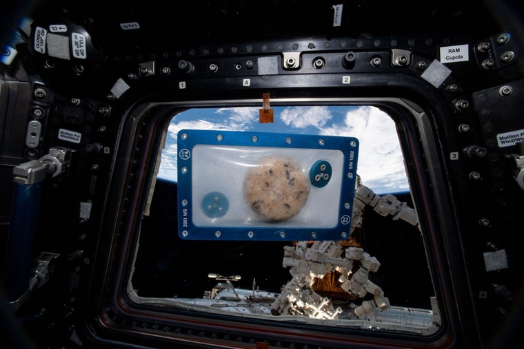 DoubleTree by Hilton chocolate chip cookies to be first food baked in space