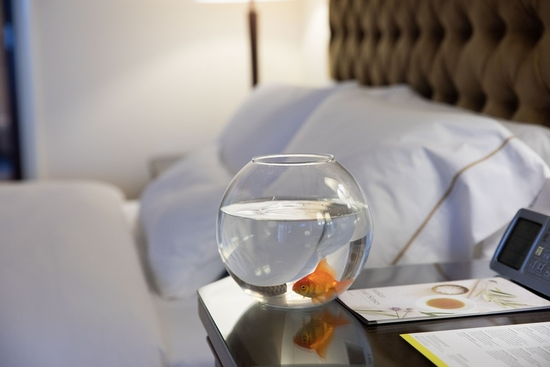 Guests at The Westin Mina Seyahi can request for goldfish in their rooms as part of the 'Westin Wellness' initiative.
