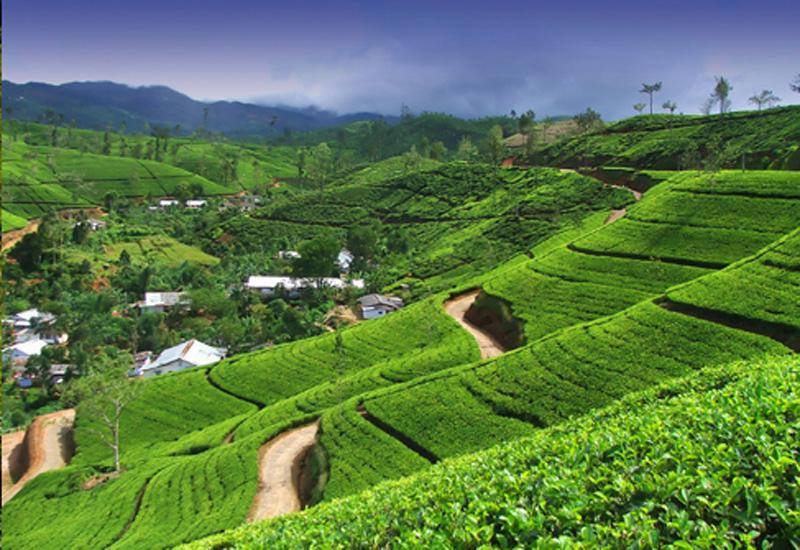 Sri Lanka offers tea experience holidays.