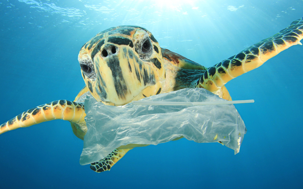 With 86% of turtle species and 44% of marine mammals estimated to have fed on plastic, change is needed to stem a global catastrophe