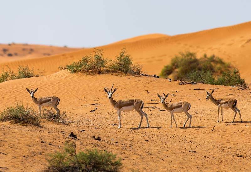 The extensive natural underground water reserve helps to sustain a vast bio-diversity of wildlife, whilst the cooler climate enables this indigenous species to flourish