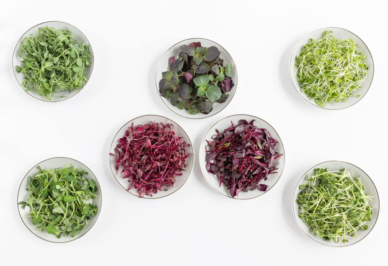 Seven varieties of microgreens are available